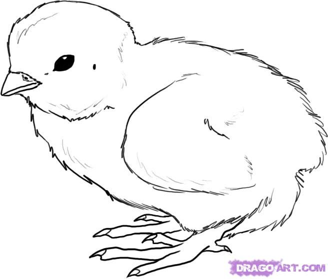 Line Drawings Of Baby Animals : Free chicken drawing how to draw a chick step by