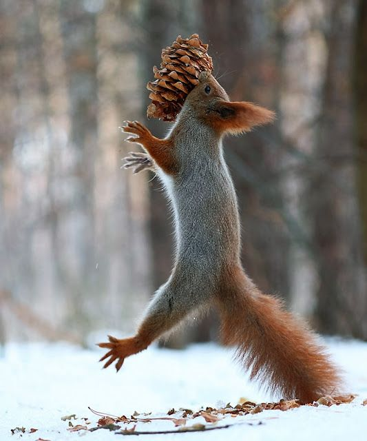 De tijd van hun leven hebben deze twee eekhoorns. Of niet?