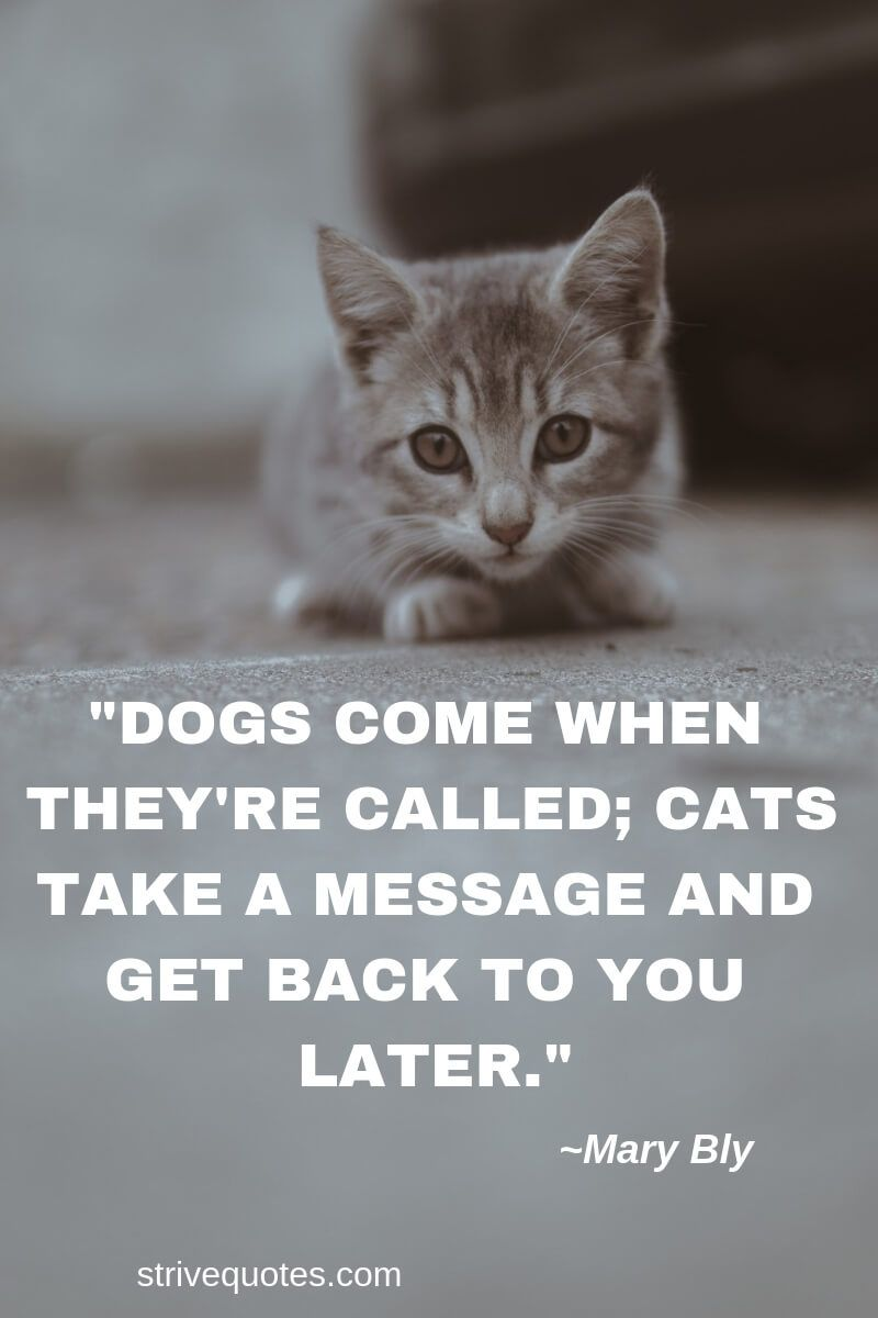 20 Funny Cat Quotes Sayings Images Strive Quotes Cat Quotes Cat Quotes Funny Inspirational Pets