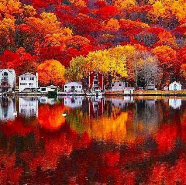 Fall on the lake #autumnfoliage