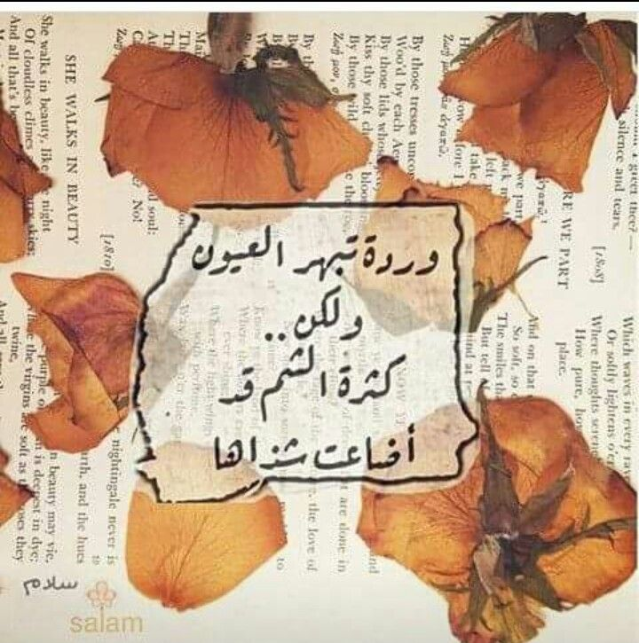 Pin By رغد ناصر On ورد في كلمات She Walks In Beauty Soft Wild