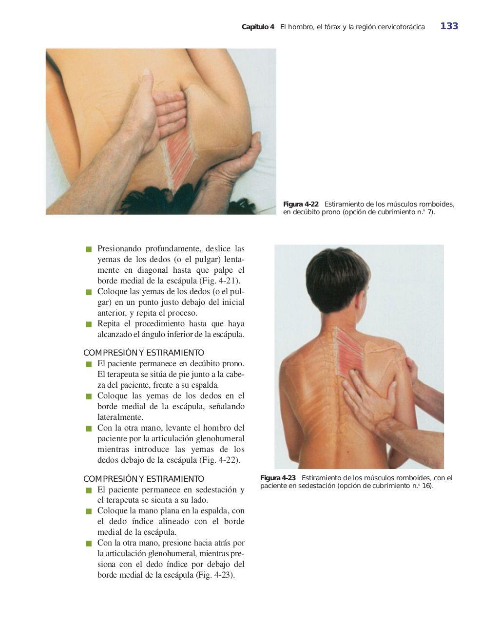 Figura 4-24 Músculo dorsal ancho. Etimología Del latín, latissimus ...