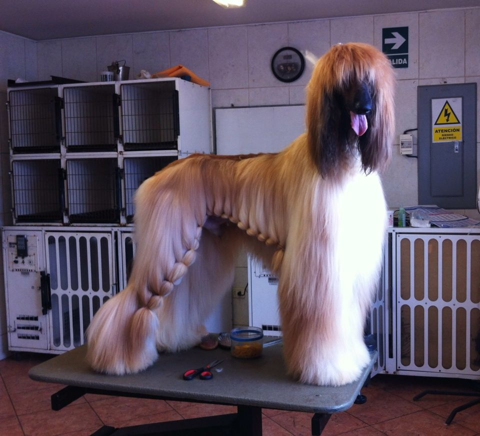 Dog Groomers Image By Heidi Kempisty On Dog Grooming Pet Resort Dog Grooming Shop