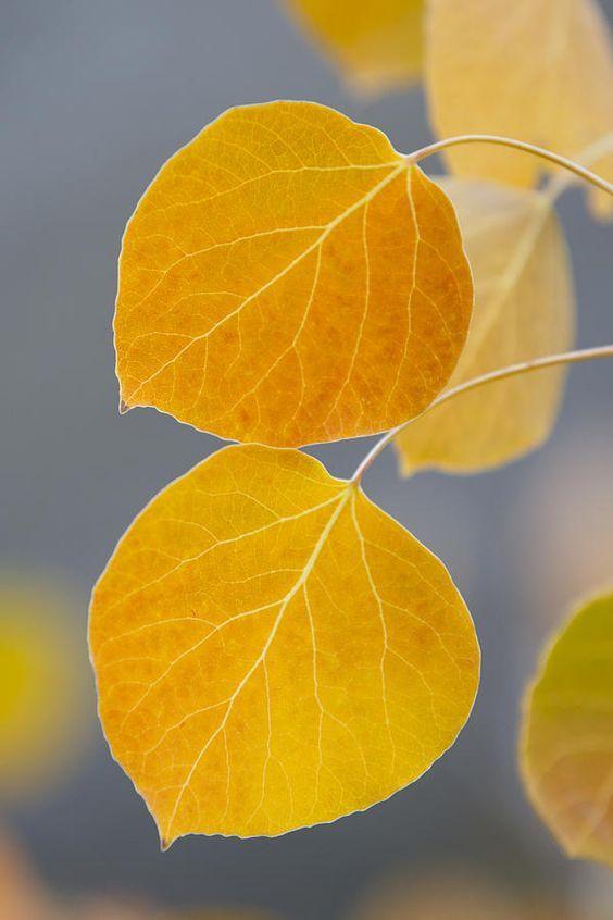 autumn in golden wonder おしゃれまとめの人気アイデア pinterest bertrandduguesclin 落ち葉 アート 紅葉 落ち葉