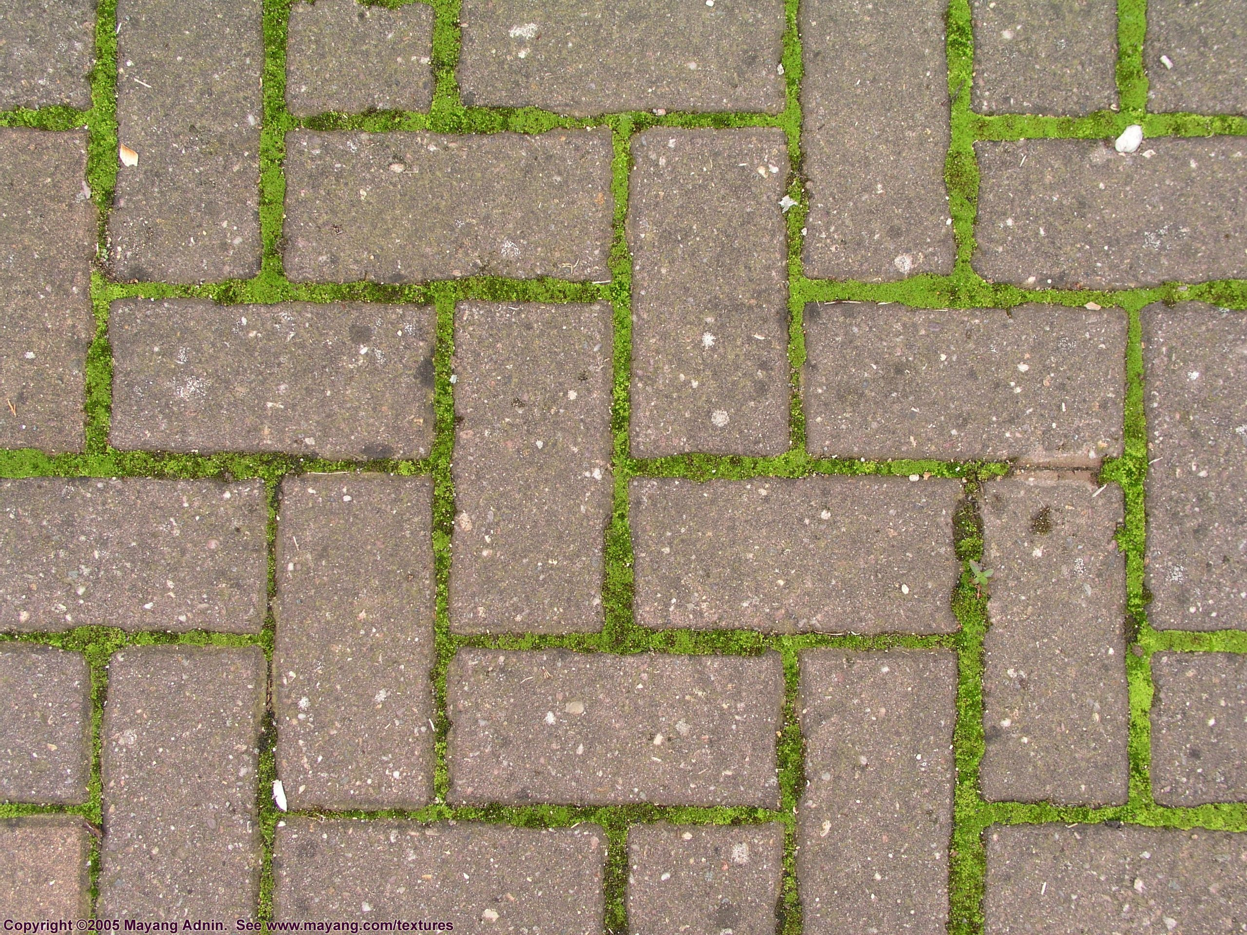 herringbone brick pattern with moss | Exterior | Pinterest ...