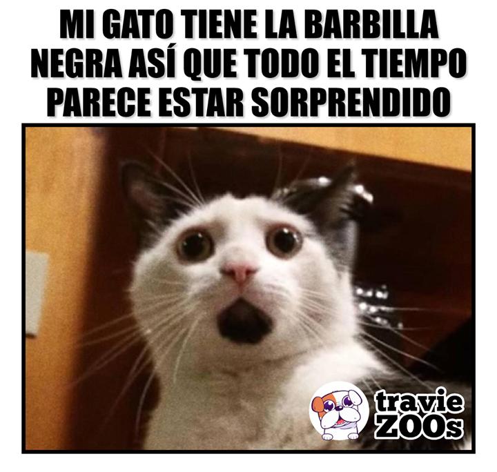 Oh My Cat Memes Divertidos Meme Gracioso Meme Gato