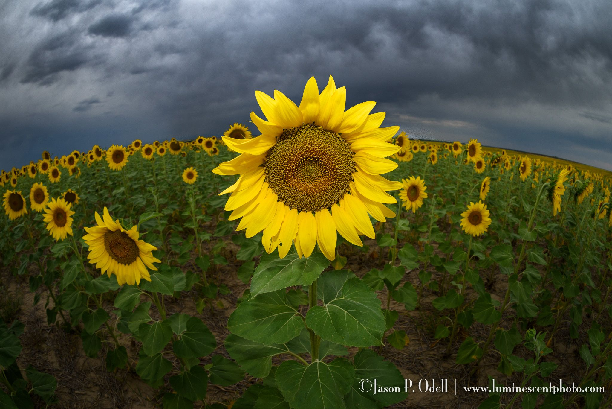 POTD: Sunshine on a cloudy day | Jason ...