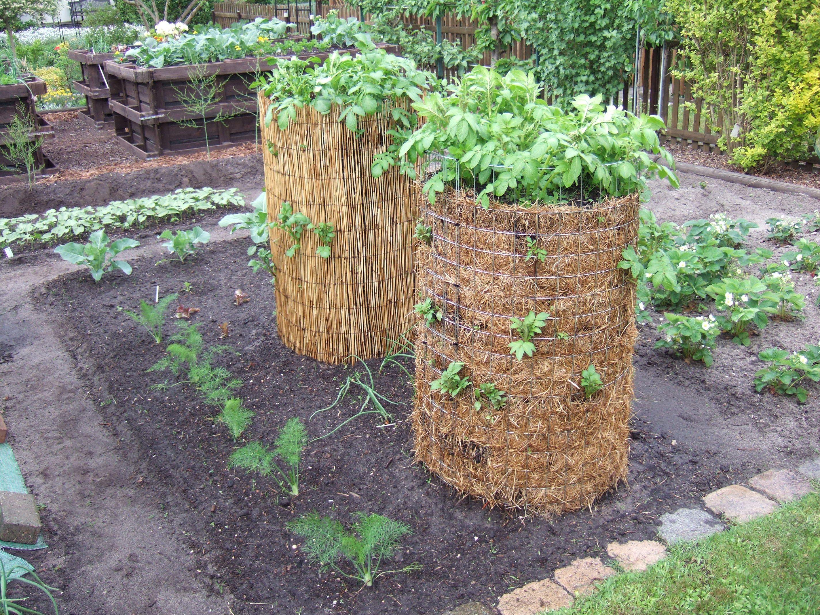 Perfect Bild MB Garten Forum Haus Pflanzen Gartenpflege u Hausbau