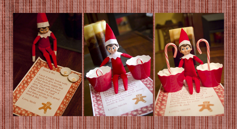 How To Grow A Candy Cane Santa Sends Magic Beans Home