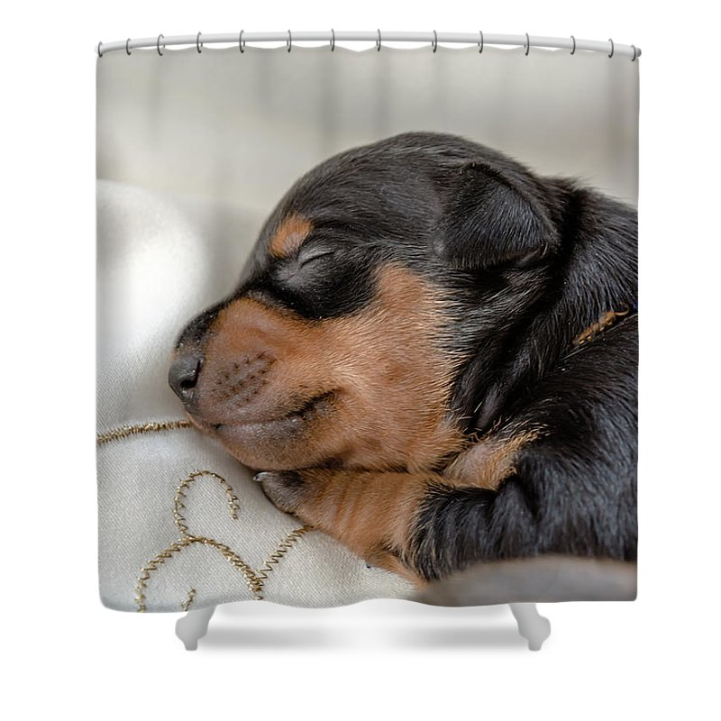 Portrait Of Little Sleeping Puppy Shower Curtain For Sale By