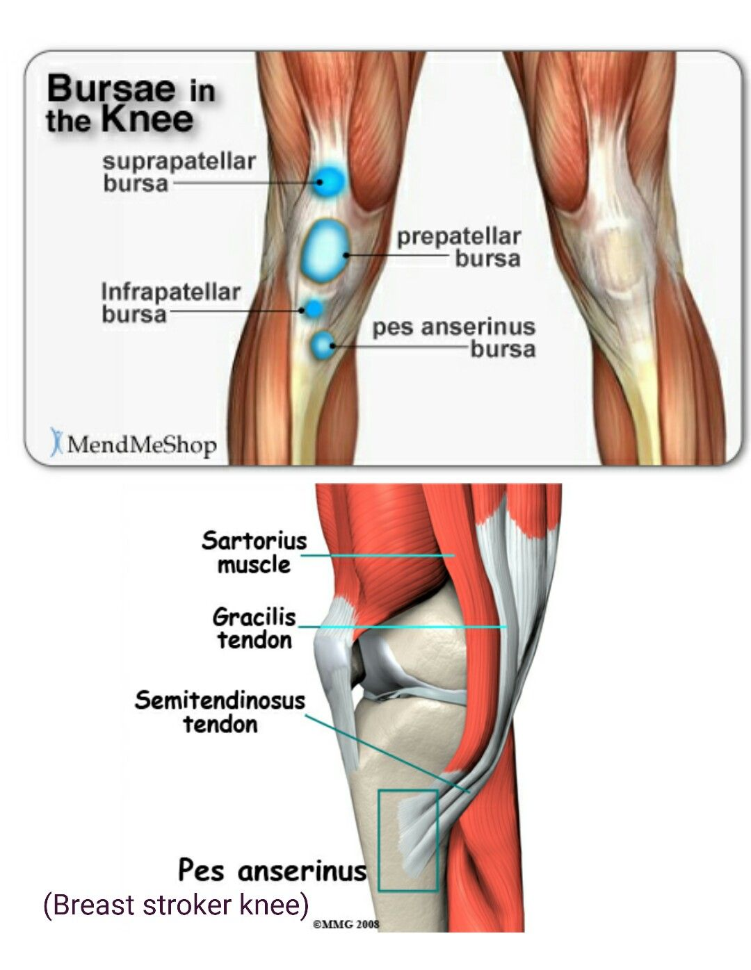 Bursae In The Knee Orthopedics Pinterest