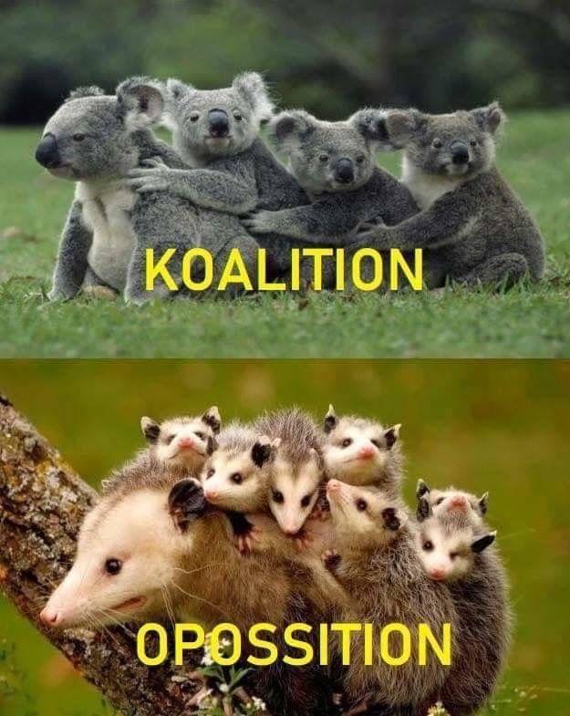Pin by Melanie Moses on I  Funny Koala Memes
