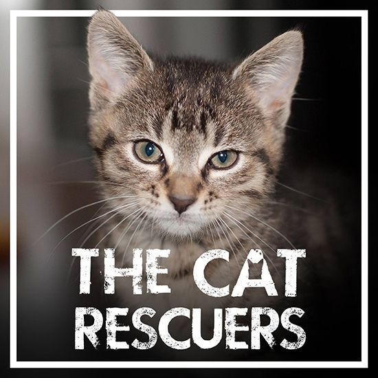 New Documentary Sheds Light On Cat Overpopulation Tnr As A