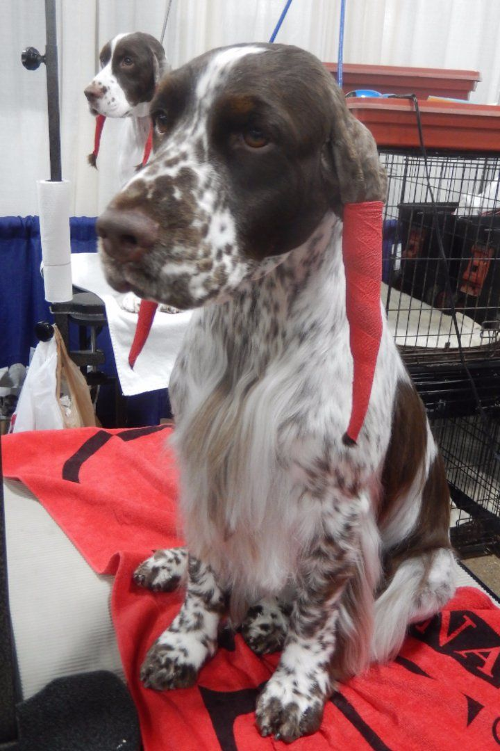 how much to tip dog groomer owner