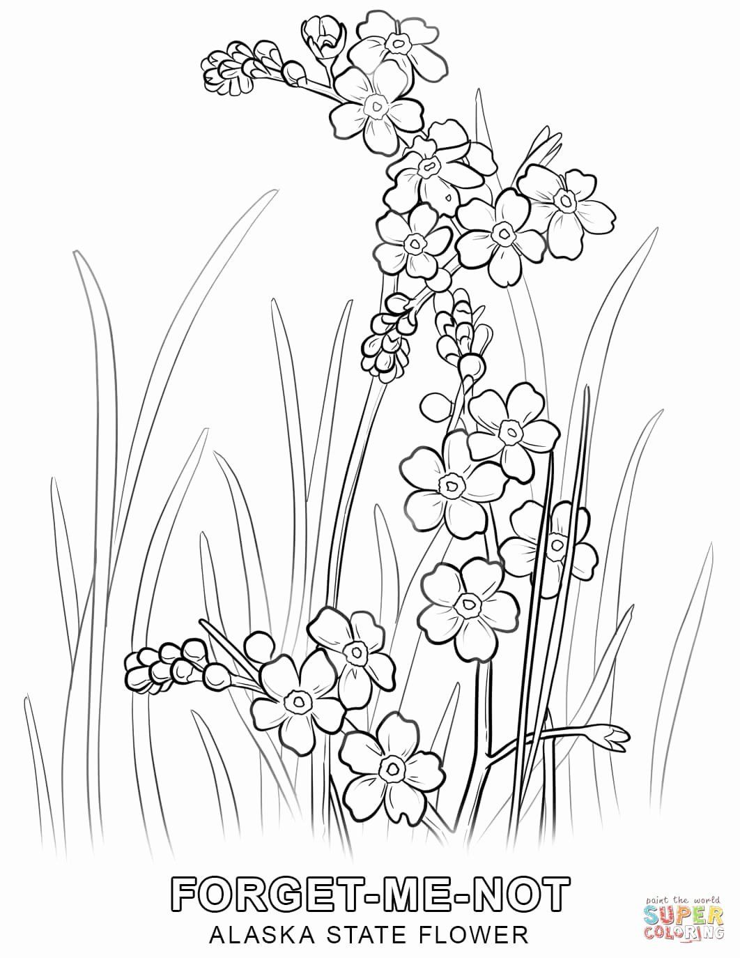 State Flower Coloring Pages Beautiful Alaska State Flower Coloring Page Drawings Sulaman Bingkai