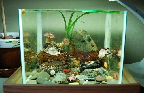 Temperate Reef Tank- awesome concept!