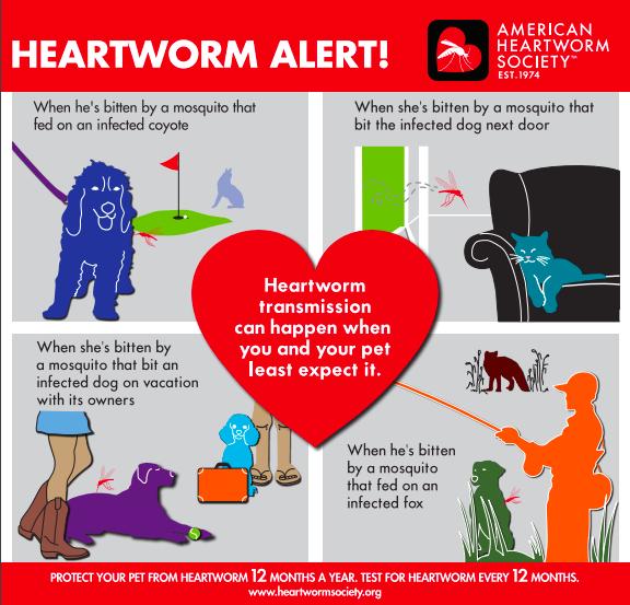 Heartworm Alert! American Heartworm Society Heartworm
