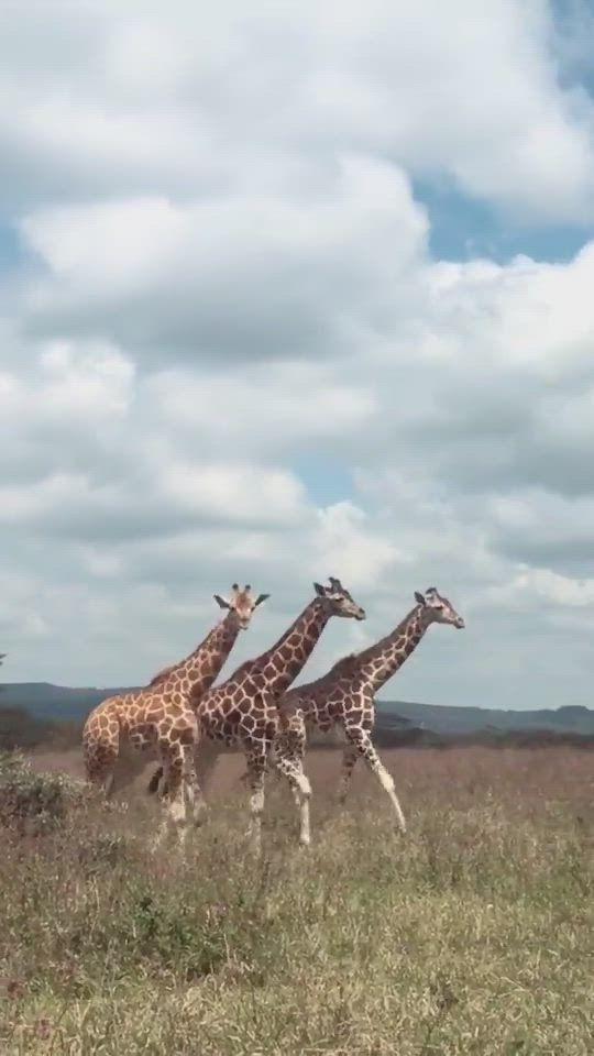 #animal #animals  #nature #cute #love #wildlife #animallovers #naturephotographn #animalphotography #wildlifephotography #animalvideos #animalsvideo