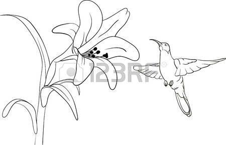 Resultado De Imagen Para Dibujo De Colibri Chupando De Una Flor