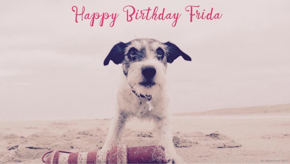 Happy Birthday Frida Ein Jahrzehnt Grossenwahn Hunde