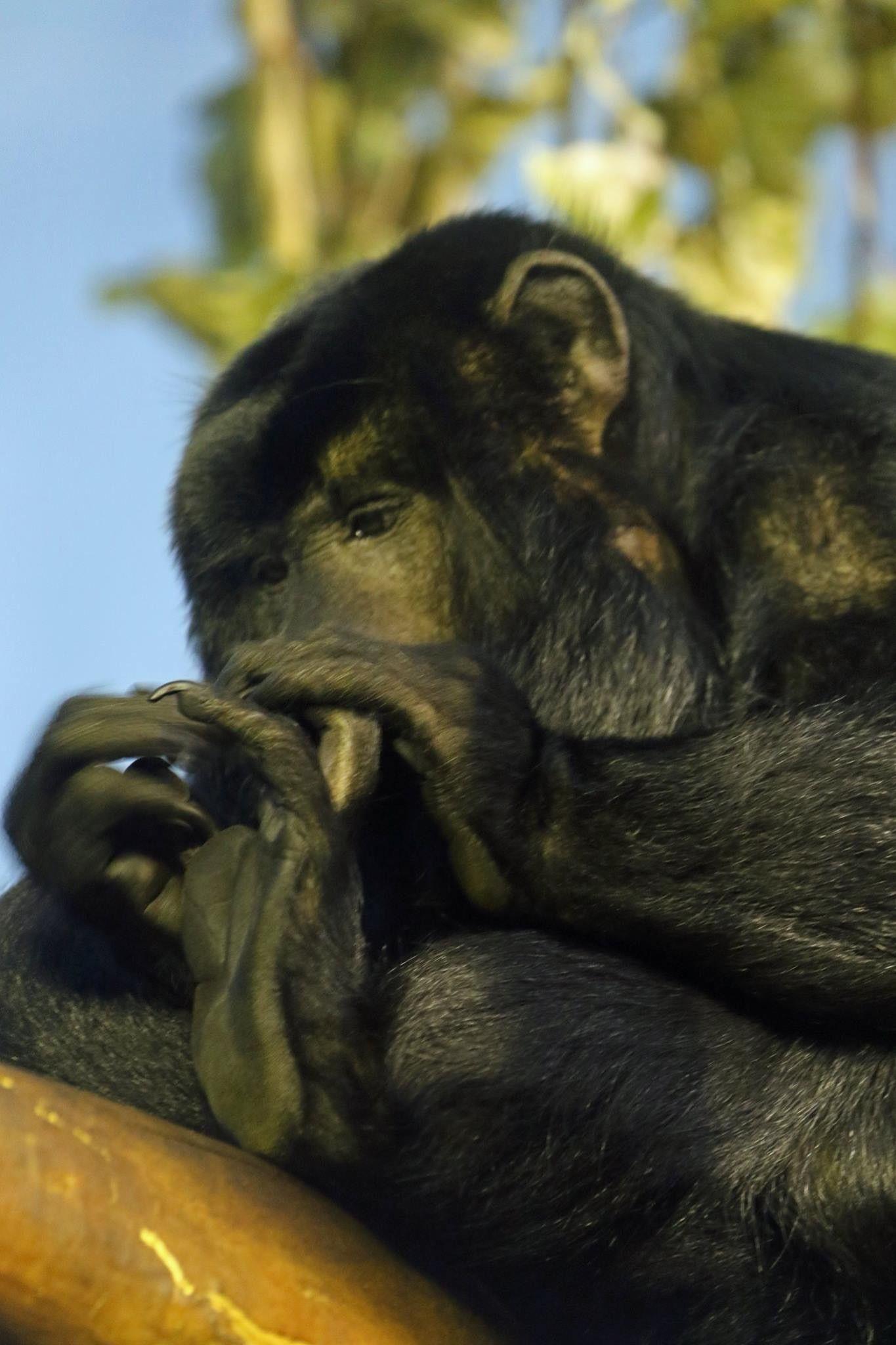 Pin by Debbie Aden on Primates Denver zoo, Primates