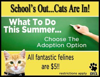 Animal Attraction School S Out And Cats Are In At The Houston