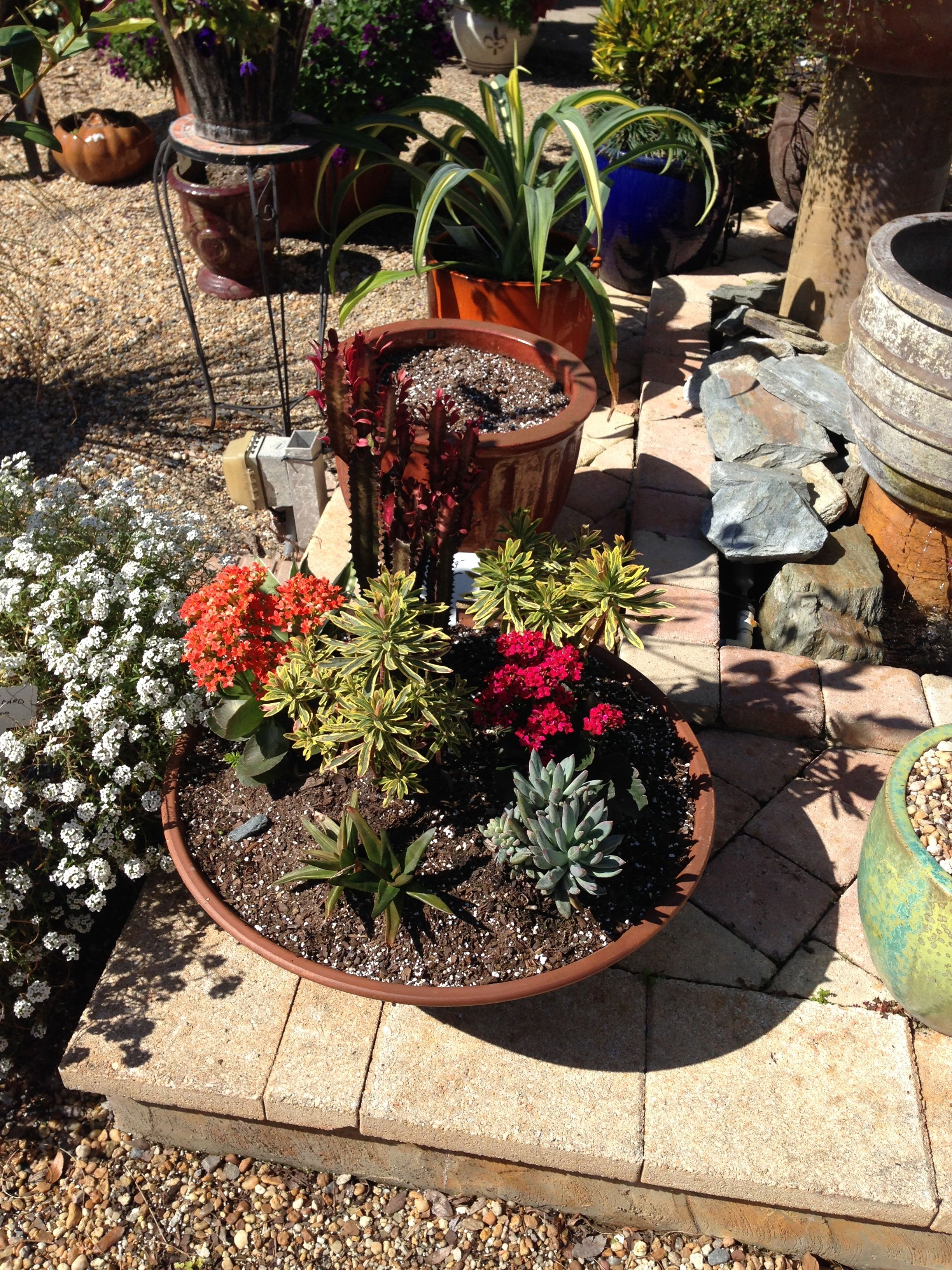 Lucas Nursery Oviedo Fl Porch Ideas Landscaping