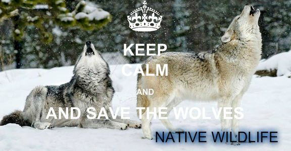 WE THE PEOPLE DEMAND A STOP TO WOLVE AND COYOTE HUNTS BY AIR OR DOGS OR IN ANY HUNTS..