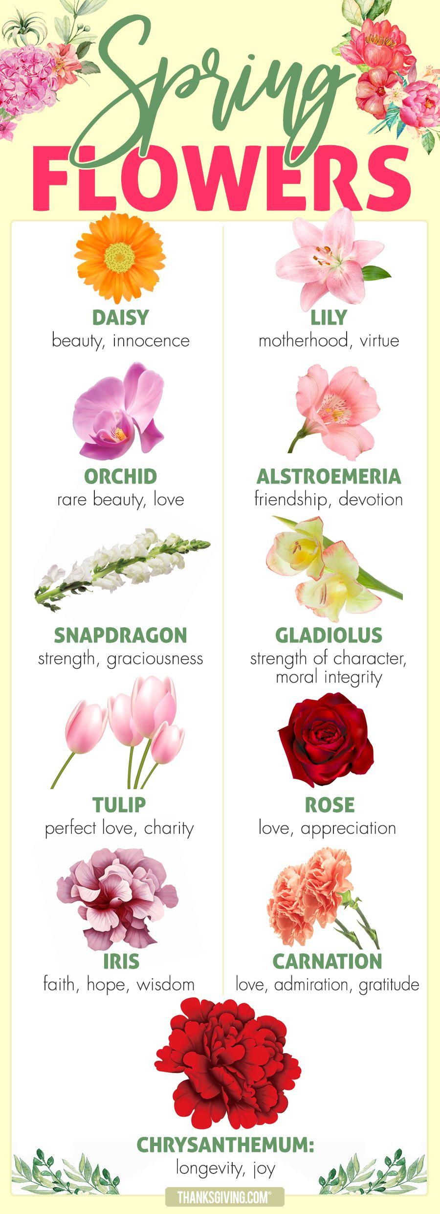 Beauty Love Hope More Spring Flower Meanings Flower Tattoo Meanings Spring Flowers Flower Meanings