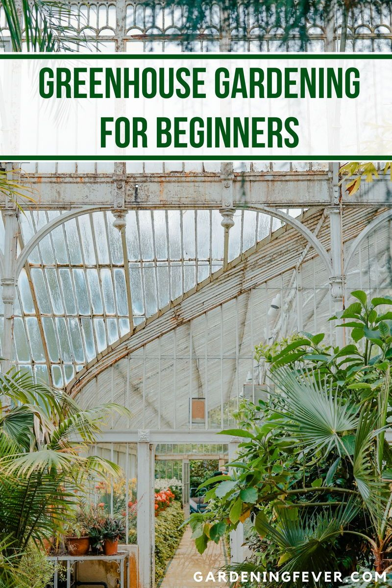 Gardening in A Greenhouse for Beginners - Gardening Fever