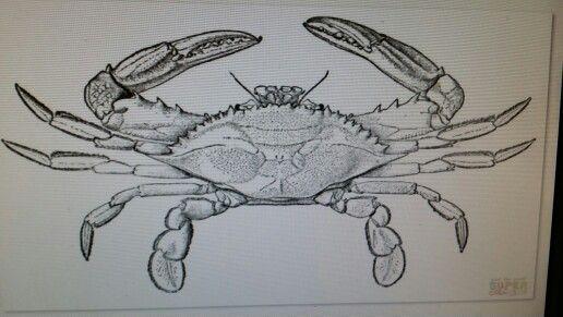 Crab Coloring Page Blue Crab Crab Crab Clipart