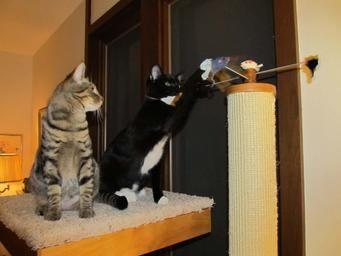 Cat Tree Reviews Cat Condo Reviews Cat Tower Reviews Cool Cats Cute Animals Cat Tower