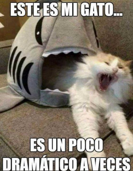 Pasa En Tnt Funny Spanish Memes Funny Animal Memes Funny Memes