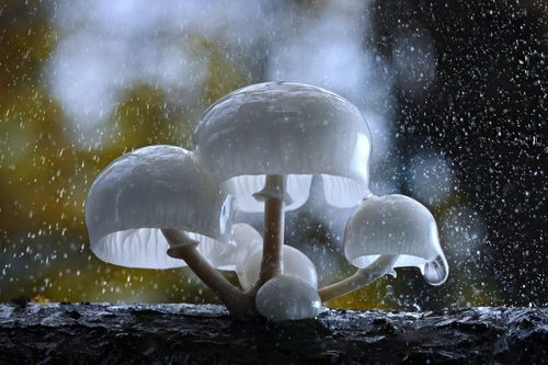 Fantastic Fungi: Otherworldly Mushrooms Photographed by Steve Axford
