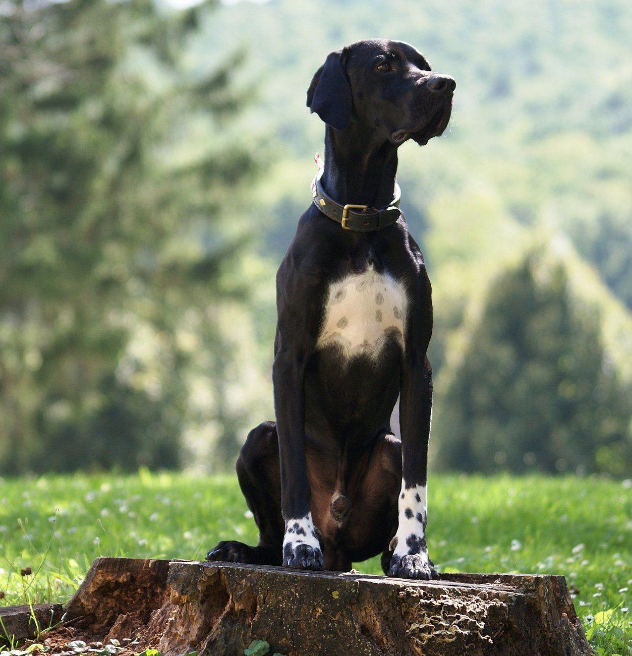 Pin Von Dr Zarbjani Auf Black Labrador In 2020 Mit Bildern Hunde Rassen Hunderassen Hunde
