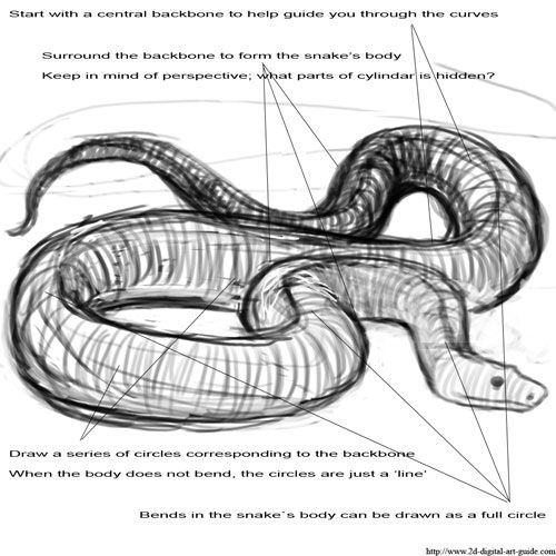 How To Draw A Realistic Snake Snake drawing step 1