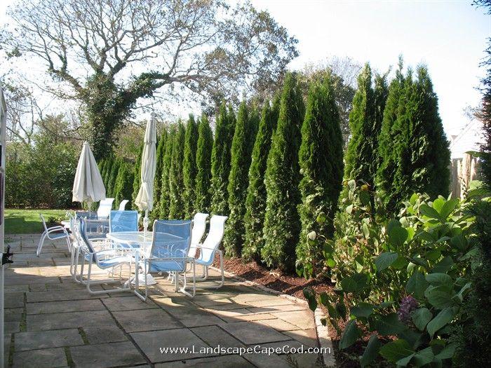 leyland cypress backyard outdoor decor backyard home