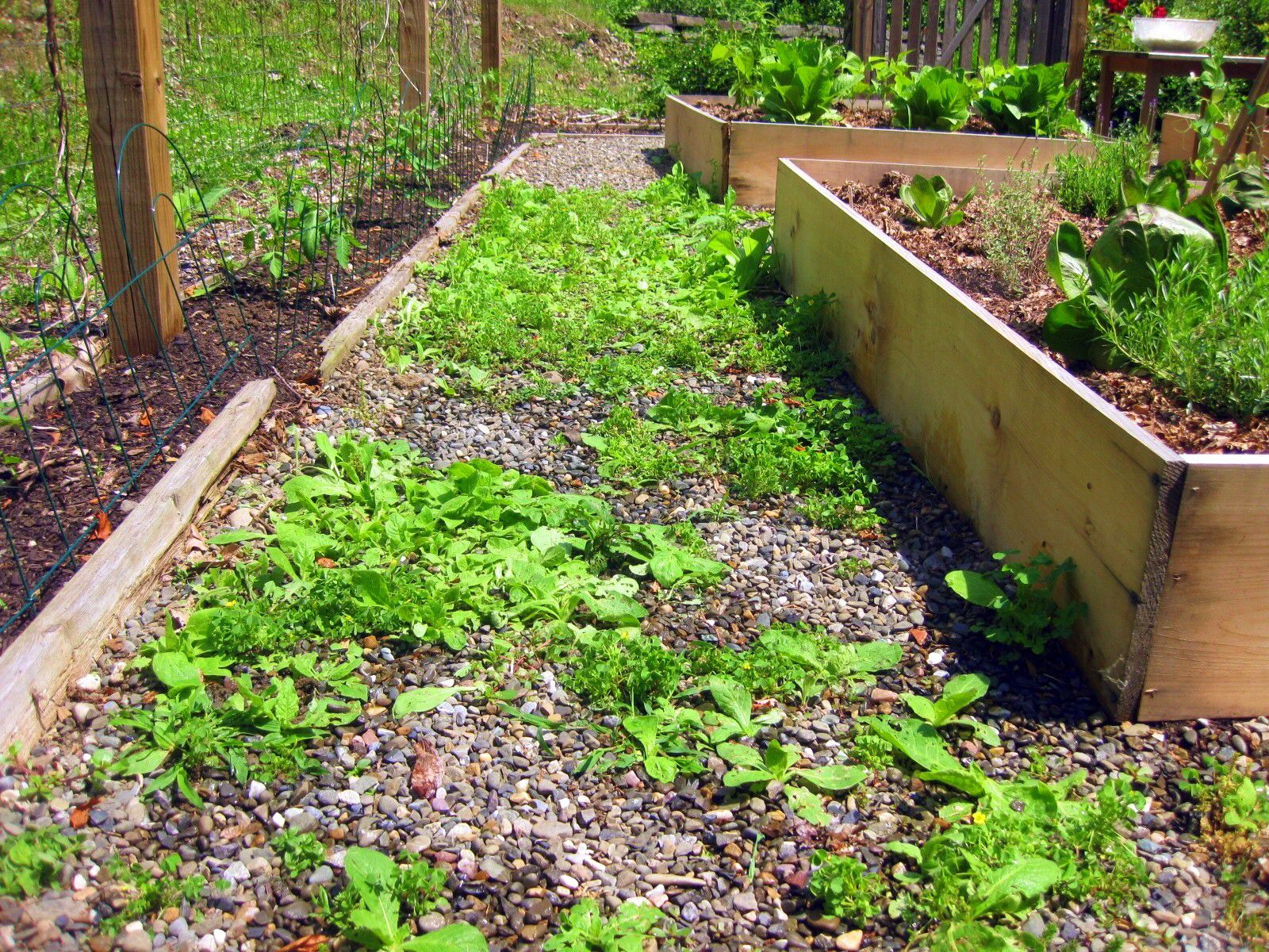 Merveilleux Weeds In Paths? Use Vinegar, Not Roundup | A Garden For The House
