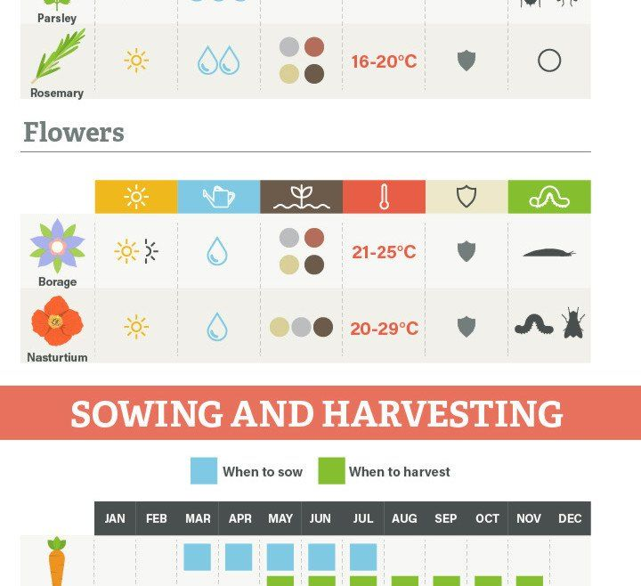Infographic 14 Edible Plants That You Can Grow Indoors 400 x 300