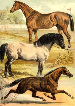 History of the 18th and 19th Centuries -- Points of a Horse