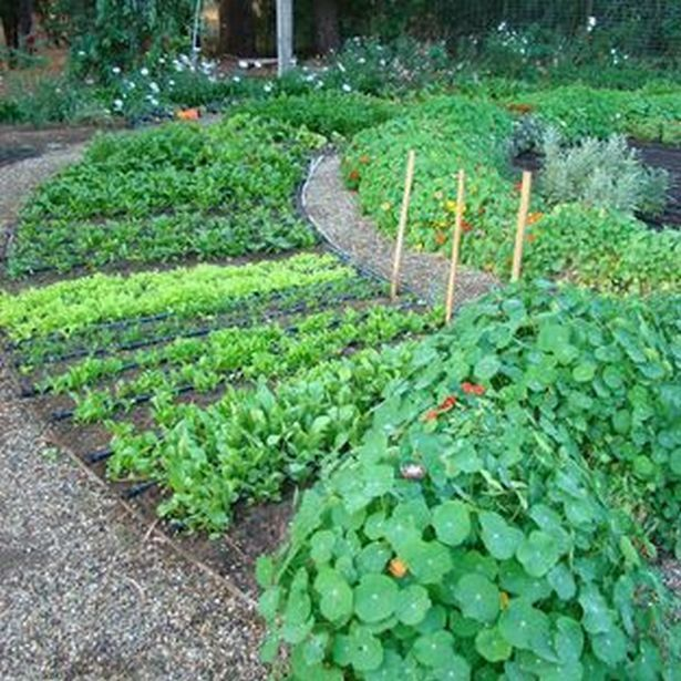 Potager Garden Design Ideas: Edible Garden Ideas On Backyards_37