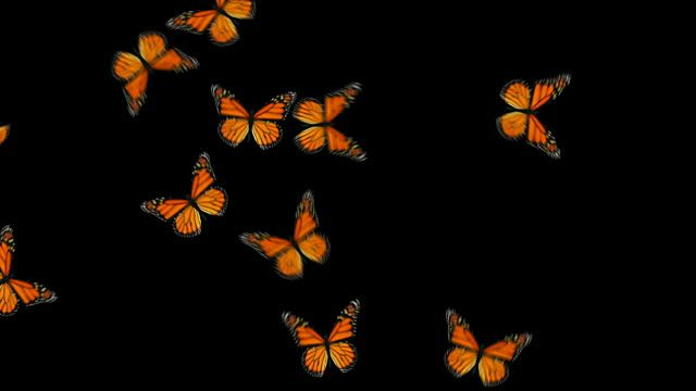 Orange Monarch Butterflies Fly In And Out Of The Screen In A 5 Second Butterfly Wallpaper Iphone Butterflies Flying Butterfly Wallpaper