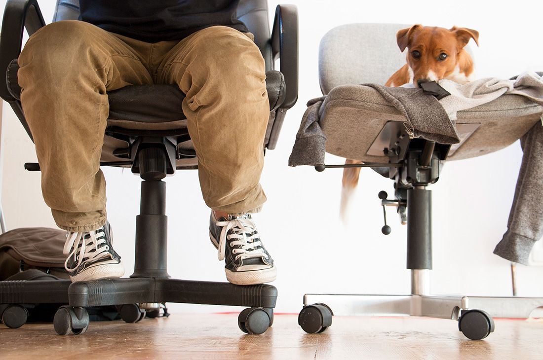 Image result for dogs in office Office pets, Office dog