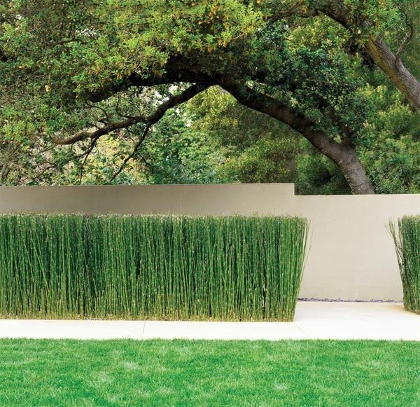 Modernen garten deko ideen pferdeschwanz schilf rasen for Gartengestaltung langer garten