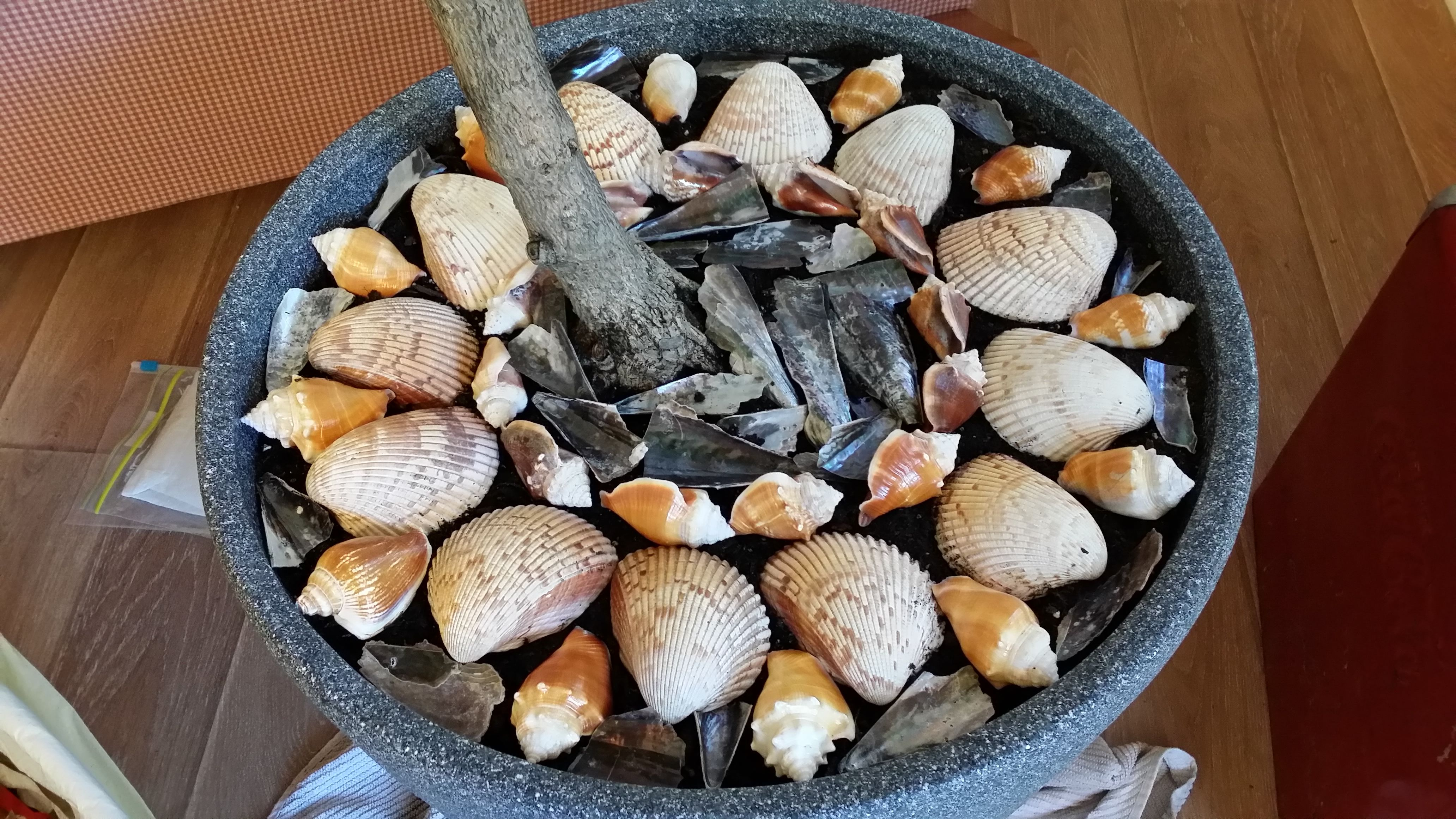 Shells are arranged on top of the soil in one of our potted plants...a great way to display our collections!
