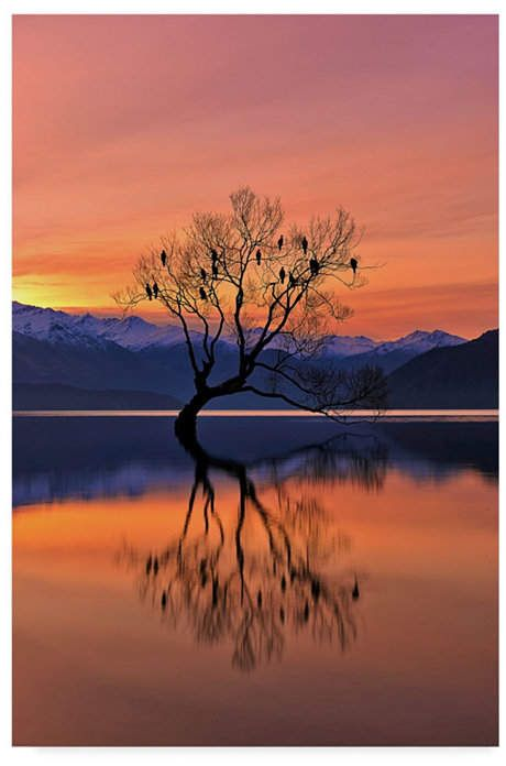 Mei Xu 'Lone Tree Silhouette' Canvas Art – 30  x 2  x 47