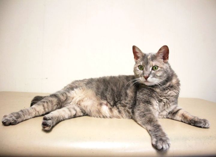 Adopt Rhema on Petfinder in 2020 Cat adoption, Calming
