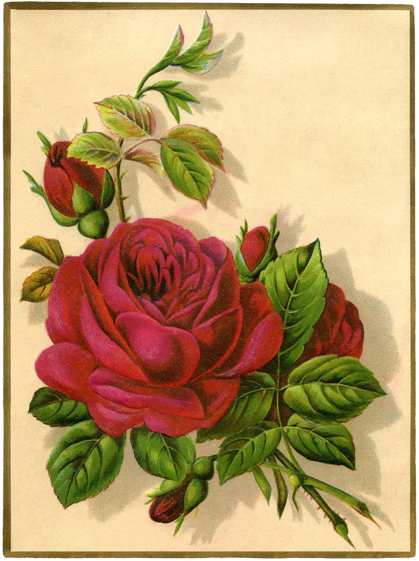 Нарисовать открытку с цветком, словами браво