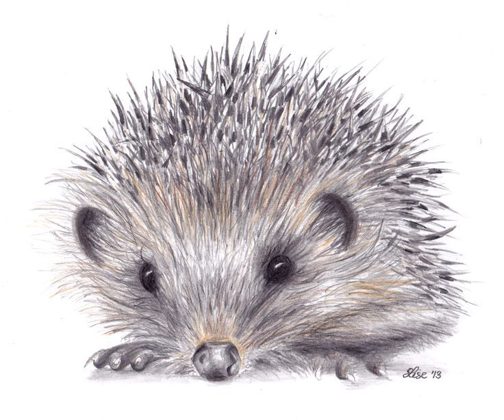 hedgehog drawing for framing woodland birthday ideas pinterest pusteblume igel und. Black Bedroom Furniture Sets. Home Design Ideas