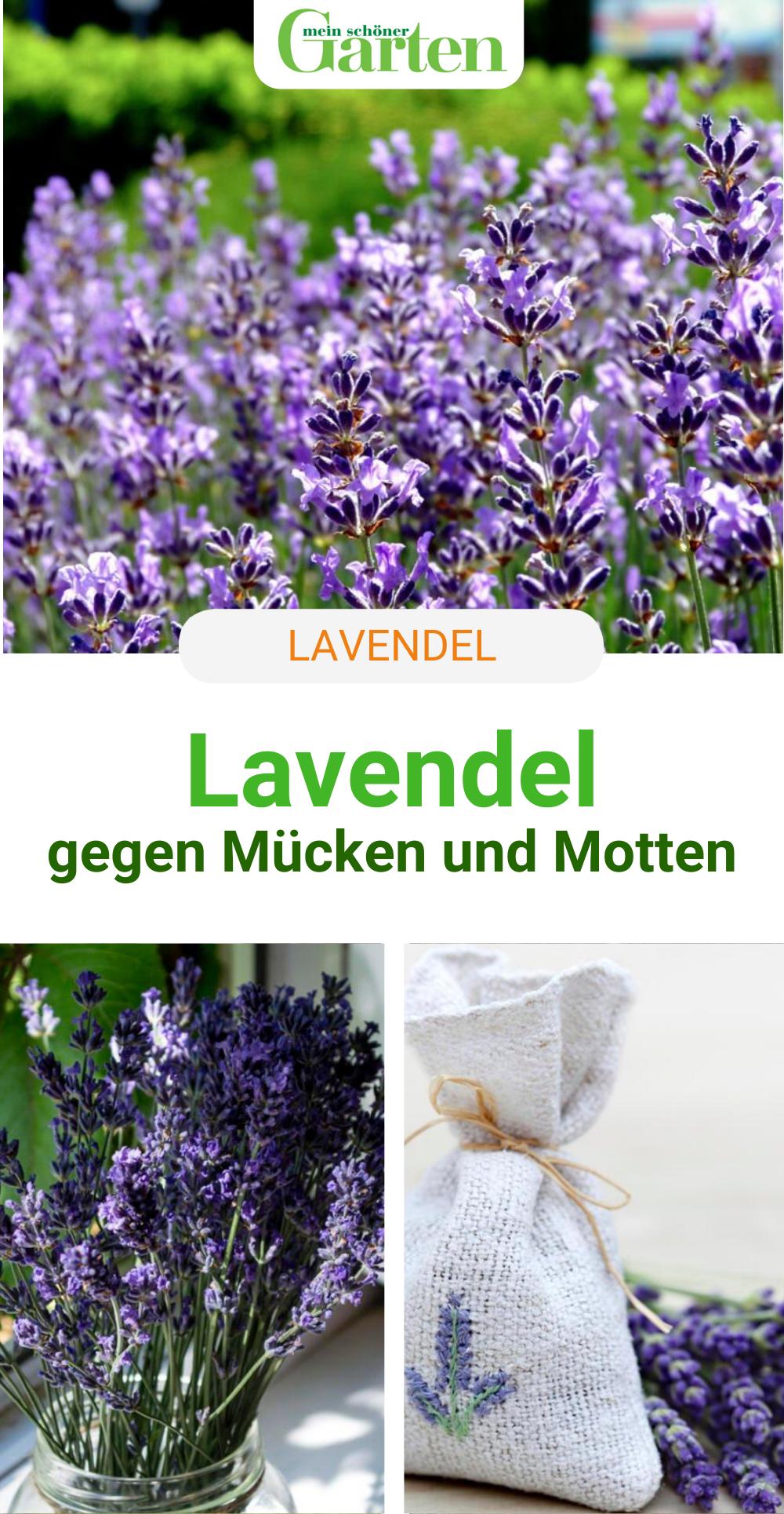 Pin Auf Lavendel